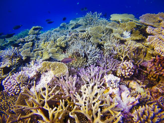 (04/01/15) สำรวจปะการังน้ำตื้นของเกาะ Thinadhoo ในเย็นวันสุดท้ายของฮันนีมูน