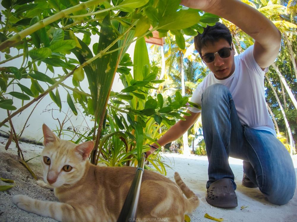 (05/01/15) ก่อนกลับ Male เจอแมวสวยๆบนเกาะ Thinadhoo หนึ่งตัว