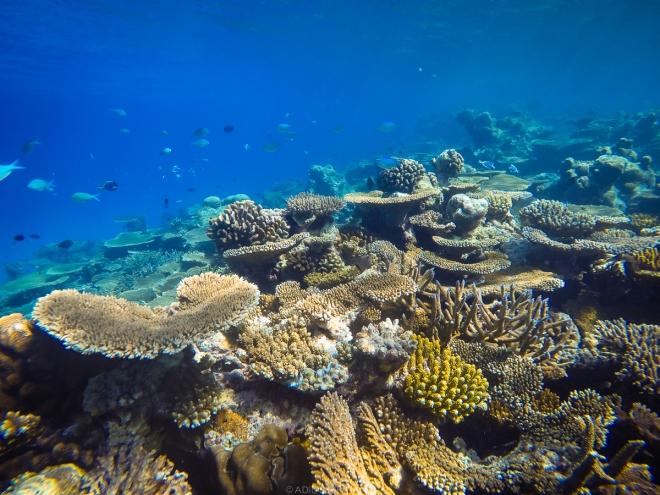 สำรวจปะการังของเกาะ Thinadhoo วันแรก