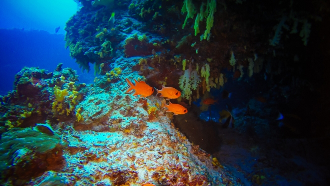 (04/01/15) ดำน้ำที่ Fotteyo Kandu สวรรค์ของการถ่ายภาพใต้น้ำ หนึ่งในจุดดำน้ำที่ดีที่สุดของมัลดีฟส์