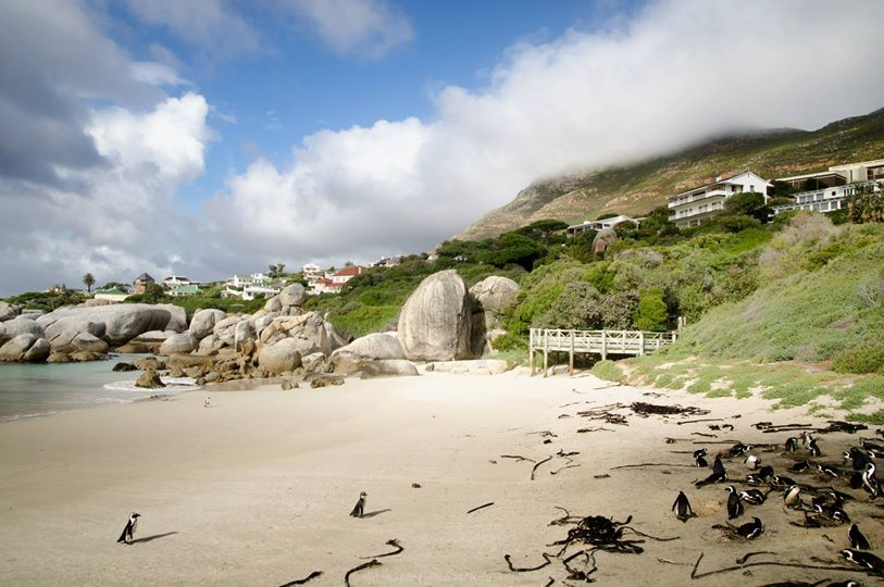 ความงามของ Cape Town ใต้สุดของทวีป Africa
