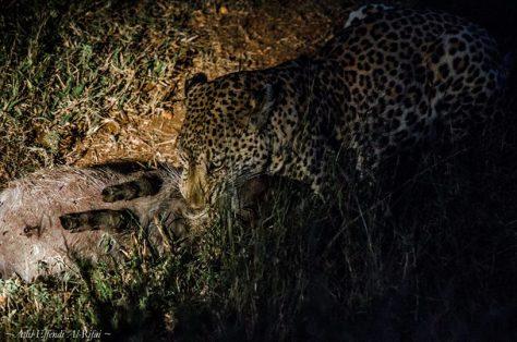 ) คราวนี้ผมเลยวางแผนออกทริปฉายเดี่ยวแบบ backpacker กะว่าจะไปเพื่อถ่ายภาพแนว landscape และ wildlife ให้เต็มเหนี่ยว ตามใจตนเอง สถานที่ที่ผมเลือกก็คือ South Africa ที่ไม่ต้องใช้วีซ่า และมีทุกอย่างที่ผมปรารถนา สัตว์ป่าซาฟารี ภูเขา น้ำตก เหว ชายฝั่ง ทะเล ทุ่งหญ้า ภารกิจของผมหลักๆในครั้งนี้ที่ต้องให้ได้มาคือ ภาพสิงโต ทิวเขาสวยๆ และฉลามขาวครับ โดยผมเริ่มออกเดินทางจาก Johannesburg เมืองหลวงของ South Africa ลงไปสู่เมือง Cape Town ทางใต้สุด การเดินทางก็ง่ายครับสำหรับ backpacker มันจะมีการเดินทางชนิดหนึ่งชื่อว่า Baz bus เป็นตั๋วการเดินทางแบบเหมา สามารถขึ้นและลงที่ไหนก็ได้ตลอดเส้นทาง(ซึ่งไปทั่วประเทศเลียบชายฝั่งมหาสมุทร) ระหว่างทางก็จะมี guest house มากมาย ในแต่ละเมืองซึ่งมีกิจกรรมเยอะแยะเต็มไปหมด แล้วแต่ใครจะชอบแบบไหนครับ ใครจะไปก็ลอง search google หา Baz Bus ดูนะครับ เอาหล่ะ มาดูกันเลย ว่าผมได้ภาพอะไรเจ๋งๆมาบ้าง