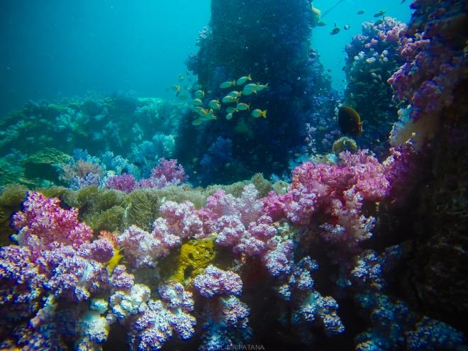 07/04/15 อลังการงานสร้าง ปะการังอ่อน ยิงไม่ยั้ง!!!