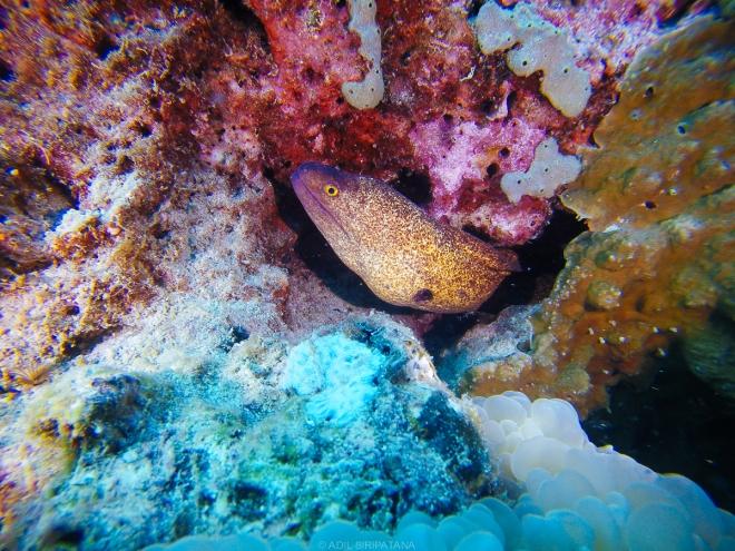 07/04/15 ปลาไหลมอเรย์สีสันเจ็บๆ น่ารักๆก็มี