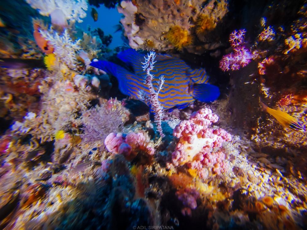 07/04/15 สวนอีเดนของ Ghost Pipefish (1)