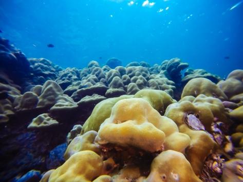 07/04/15 ปะการังโขดของตาลัง
