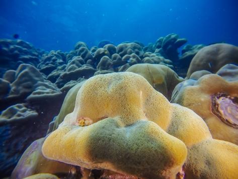 07/04/15 ปะการังโขดของตาลัง (2)