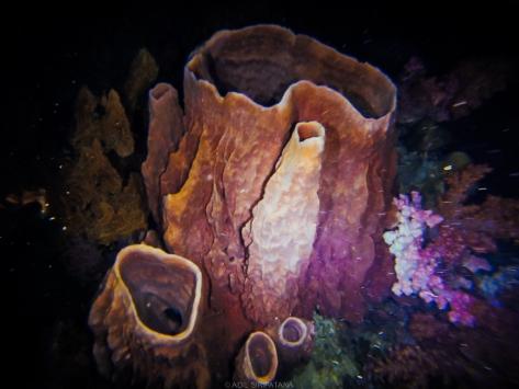 ฟองน้ำยักษ์ก็อลังการ