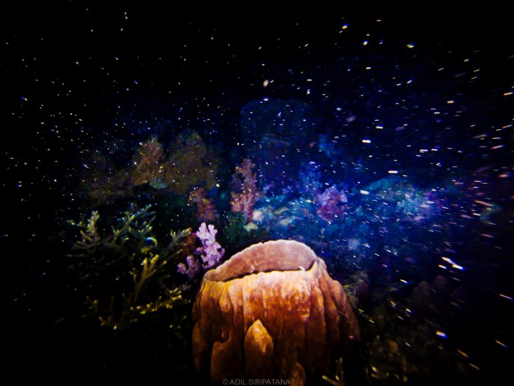 คนอื่นๆพาคุณไปดูดาวบนเขา แต่ Coralust พามาดูโกโกริใต้น้ำ