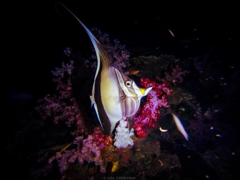 ปลาและปะการังอ่อนสวยๆ